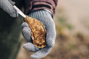 safari delle ostriche